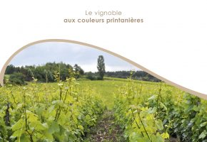 BROCHURE INT CHAMPAGNE FLEURY7